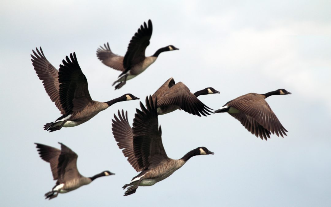 Seven Ways Golden Geese self-sabotage their own Back-Up Plans: Ignoring the risk and choosing the wrong destination