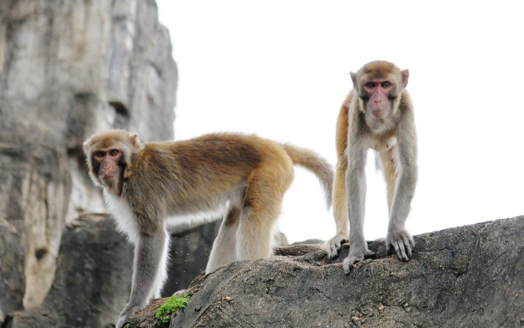 Canadian Citizenship Based Taxation… is it a case of 'Monkey See…Monkey Do?'